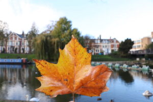 Autumn leaf and the River Cam