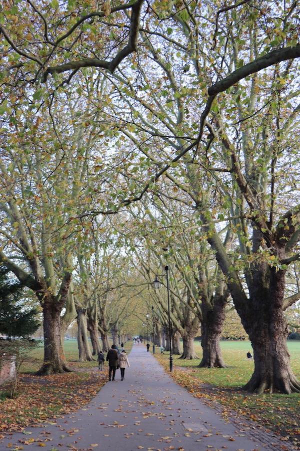 Tree Lines Avenue, Jesus Green, Cambridge